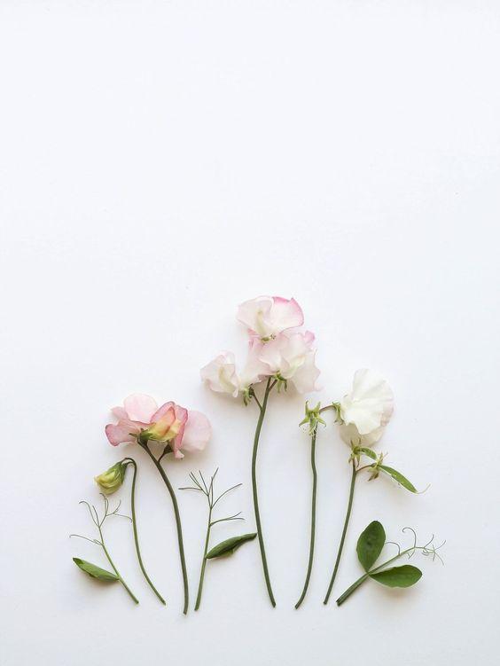 flower new